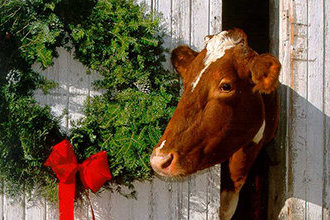 Vegán karácsony