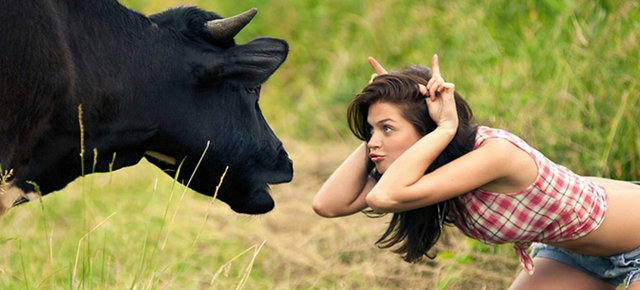 szarvasmarha